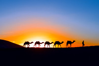 Camels caravan at sunset - 2