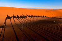 Shadows of approaching camels caravan through the sand dunes of the Sahara desert